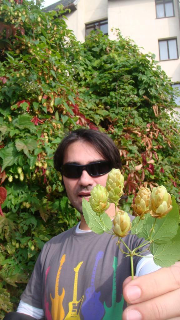 Felipe, marido da autora do blog, segurando uns galhos de lúpulo