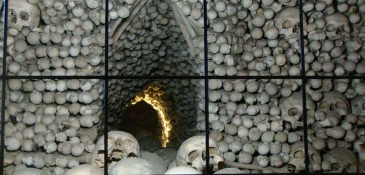 diversos ossos de crânios humano