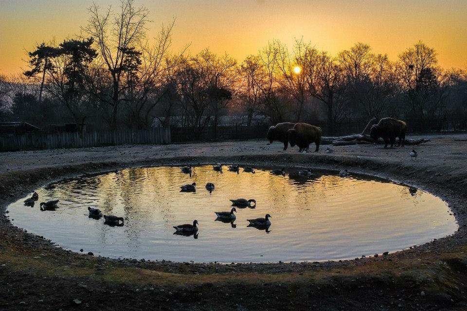 lago com patos e elefante caminhando em um por do sol belíssimo